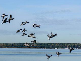 Cambio climático aves extinción