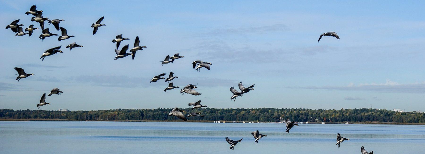 Un 29% de las aves comunes desaparece en América del Norte y Canadá