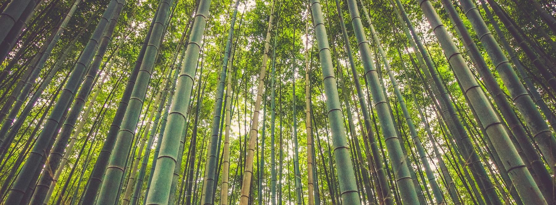 Las casas de bambú buscan su lugar en Europa