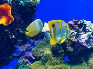 recuperar las barreras de coral