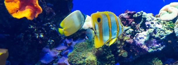 Impresión 3D para ayudar a recuperar las barreras de coral