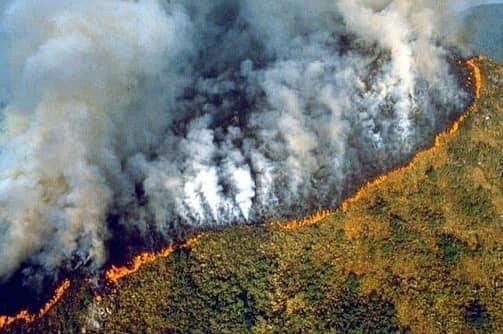 El pulmón del planeta arde: ¿qué está pasando en el Amazonas?
