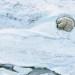Animales en peligro de extinción muestran su lado más humano