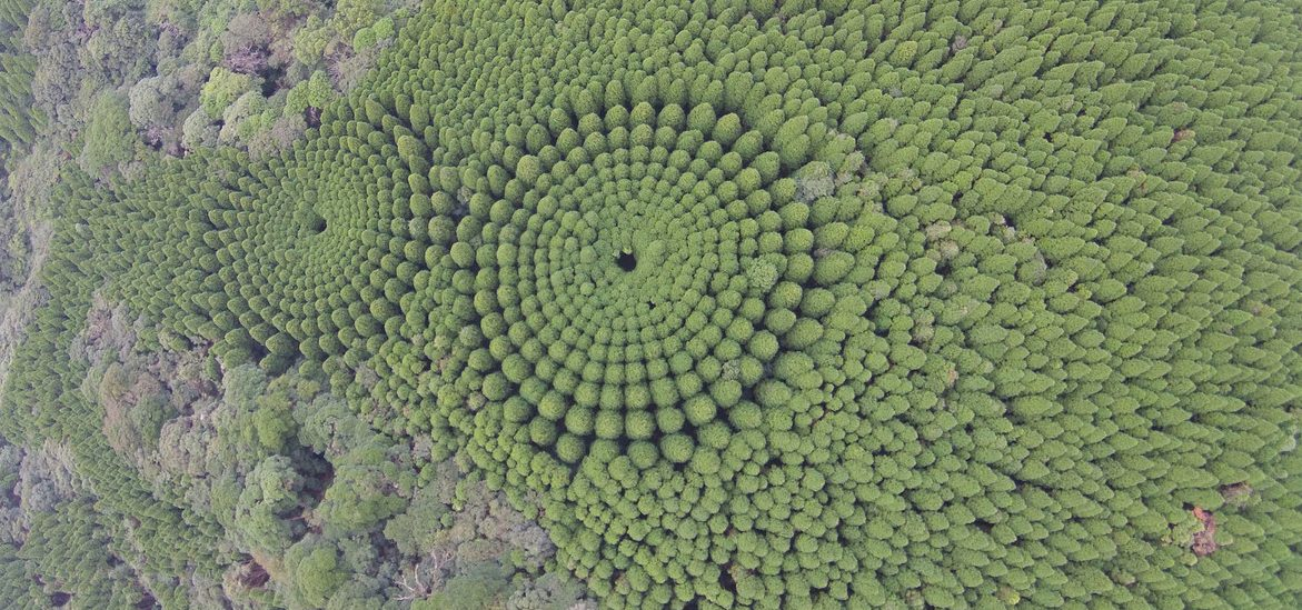 El misterioso bosque japonés que solo podrás ver desde Google Maps
