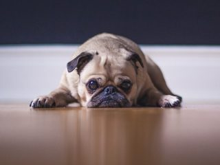 Perro corazón reduce enfermedades cardiovasculares