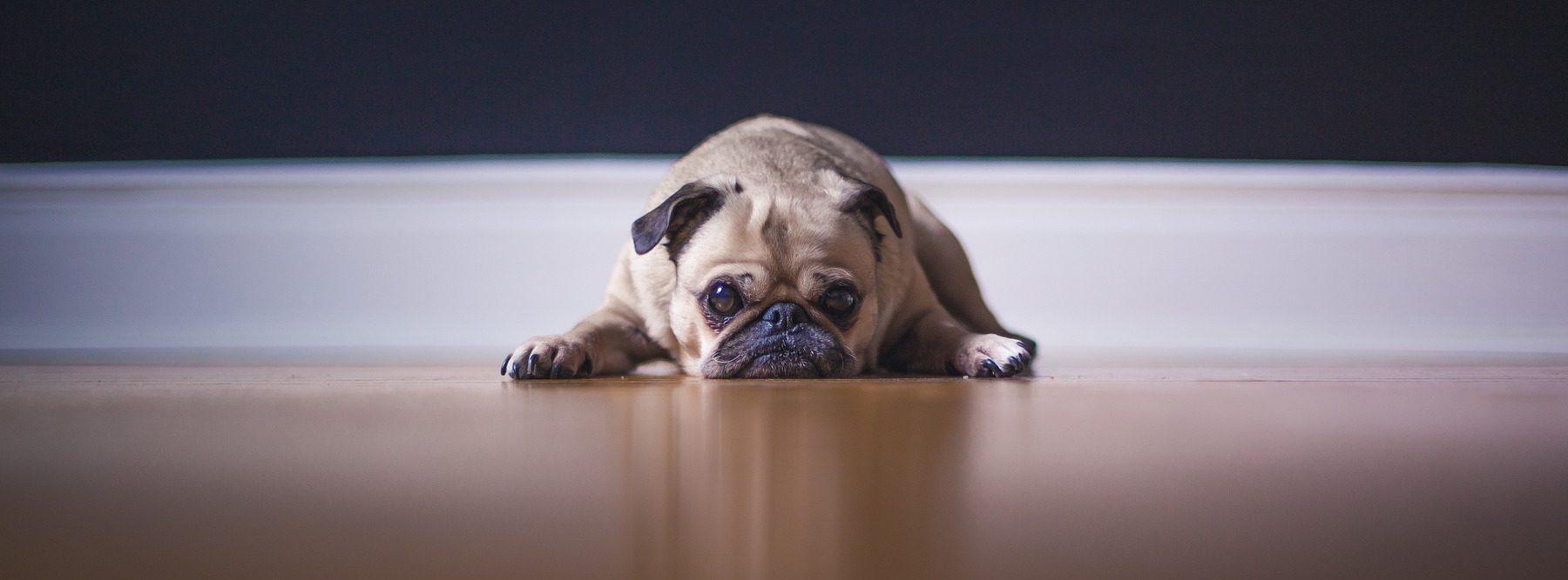 Tener un perro mejora tu salud