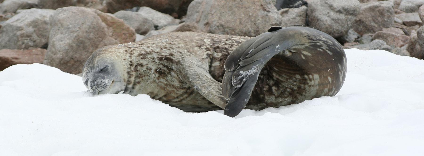 Conoce la Antártida en el documental 'Siete mundos, un planeta'