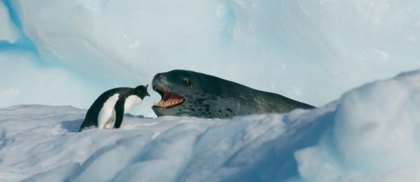 Siete mundos un planeta Antártida