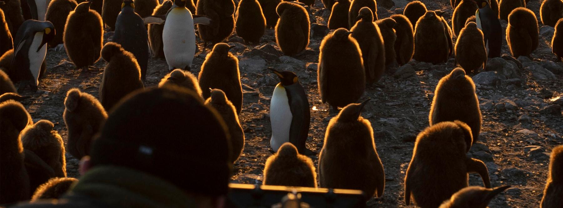 Detrás de las cámaras del documental sobre la Antártida 'Siete mundos, un planeta'