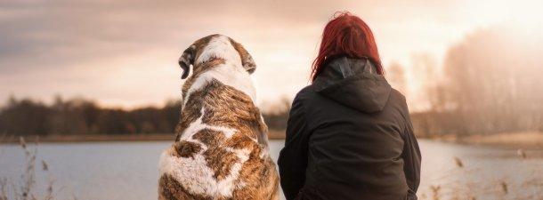 Expertos afirman que los perros ayudan al desarrollo socioemocional de los niños