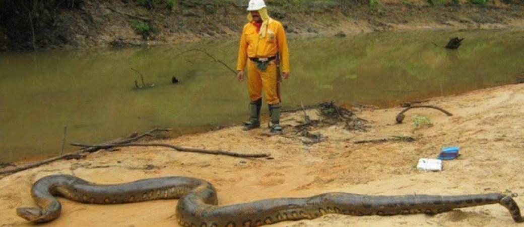 anaconda animales grandes mundo