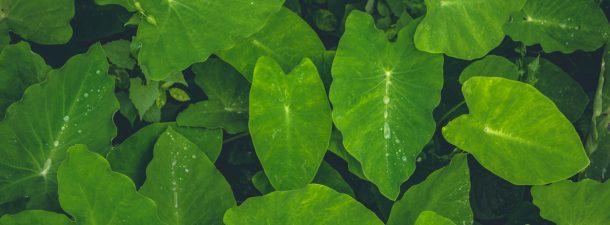 El uso de hojas artificiales para combatir el cambio climático