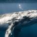 ¿Cuáles son los animales más grandes del mundo? El más largo te sorprenderá