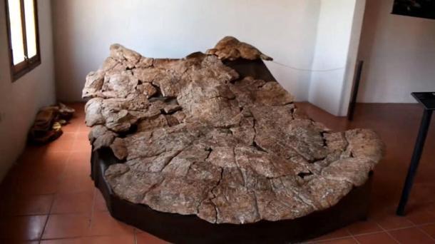Tortugas, fósiles, caparazón