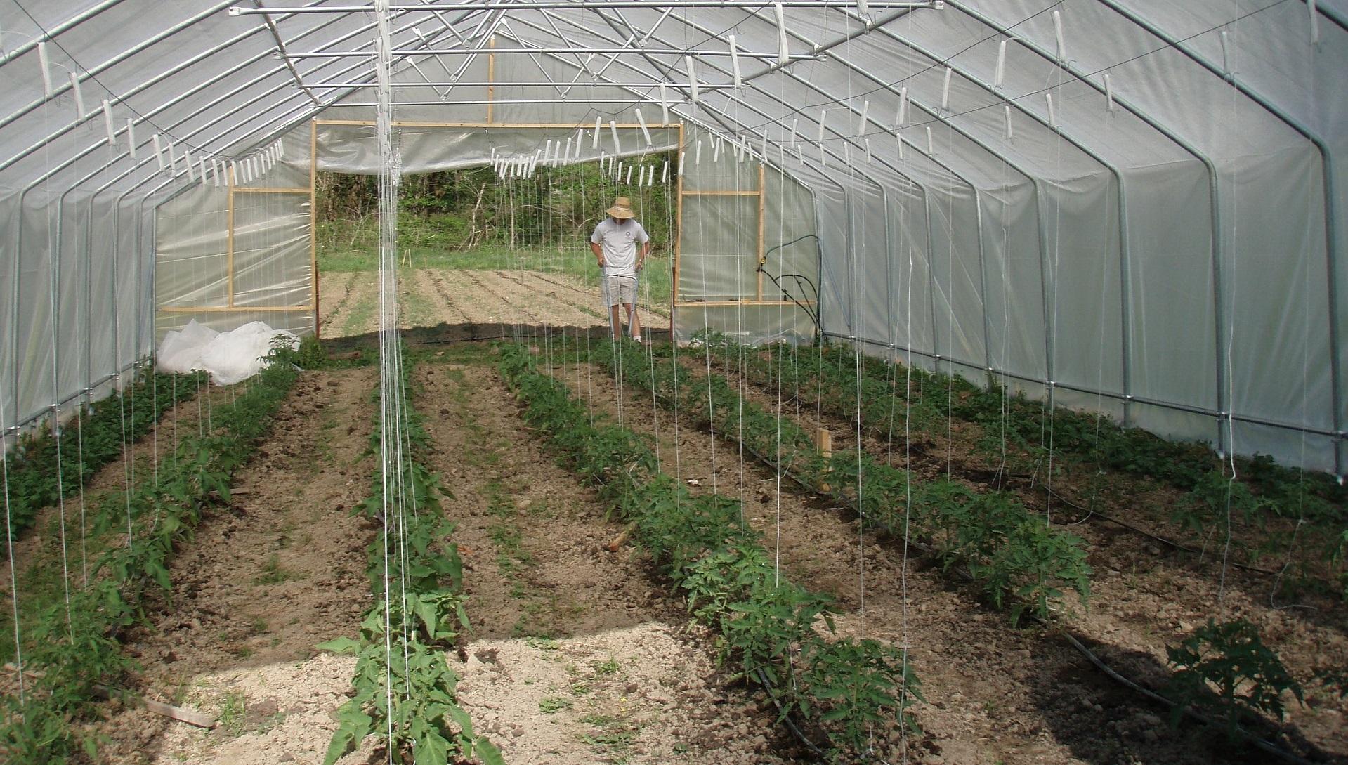 Cómo funcionarán los paneles solares transparentes, diseñados para invernaderos