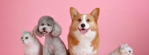 Enfermedades que pueden transmitir las mascotas y cómo prevenirlas