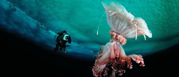 medusa melena de leon animales grandes mundo