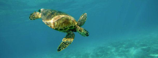 ¿Cómo eran las tortugas en la prehistoria?