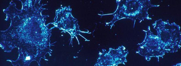¿Sabes cuáles son los virus más peligrosos?