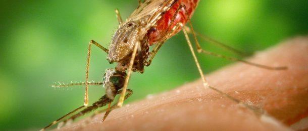 Virus más peligrosos del mundo