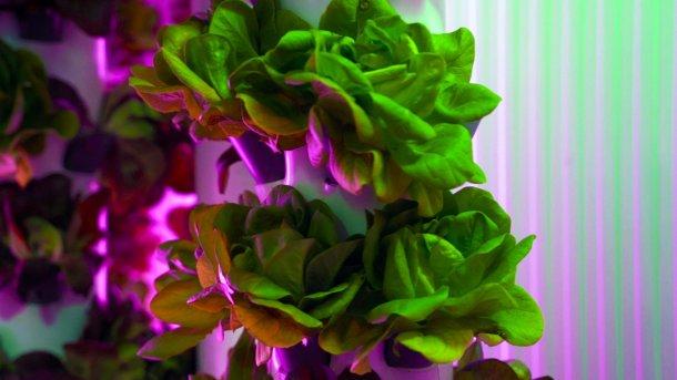 Verduras de smart green