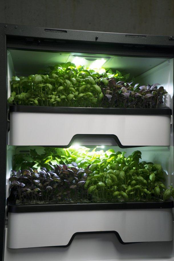 cultivo vertical de smart agro