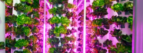 'Smart agro' contra el cambio climático