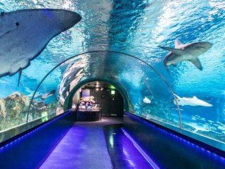 Aquarium Online Academy