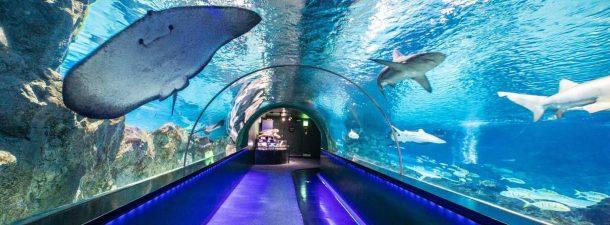Conoce el mundo marino como nunca lo habías visto con Aquarium Online Academy