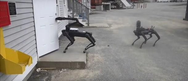 Perros robot policía Massachusetts