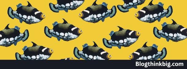Ocean Collectiv y la sostenibilidad del océano