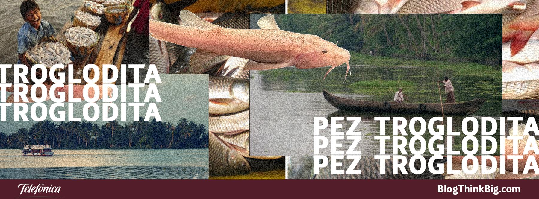 El pez troglodita más grande del mundo vive en la India