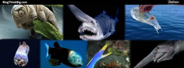 Animales marinos que parecen seres de ciencia ficción