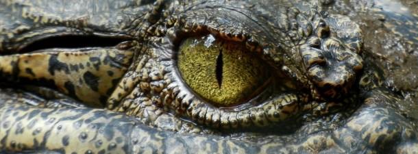 ¿Cuáles son los animales más peligrosos del mundo?