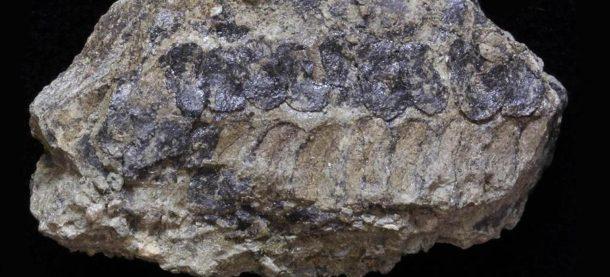 Fósiles, plantas, esporas