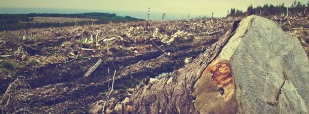 Cómo frenar la deforestación puede prevenir pandemias