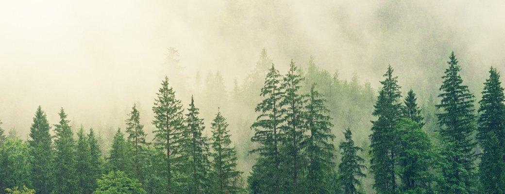 bosque arboles vegtacion evolucion de las plantas