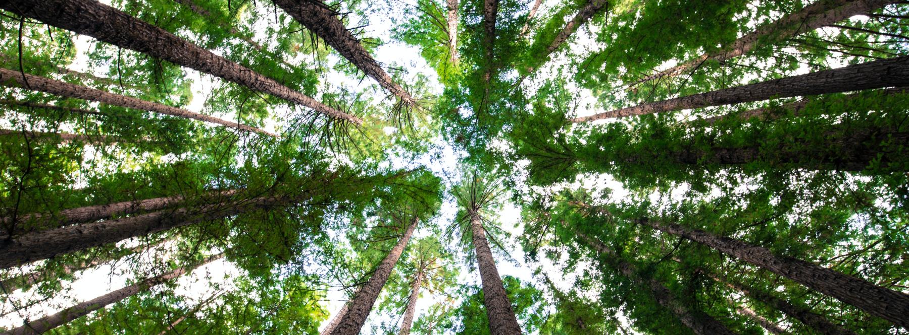 ¿Podríamos vivir sin árboles en la ciudad?