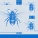 Vuelven las abejas azules, una especie considerada extinta