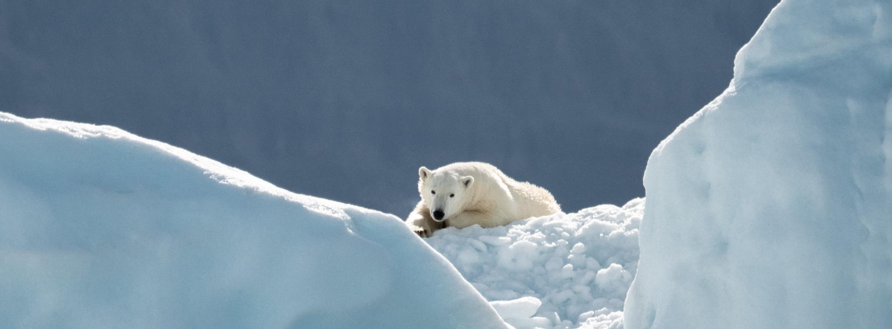 Svaldbard, el archipiélago donde reinan los osos polares