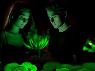 plantas que brillan