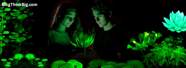 Nuevo descubrimiento para la biotecnología: crean unas plantas que brillan toda la vida