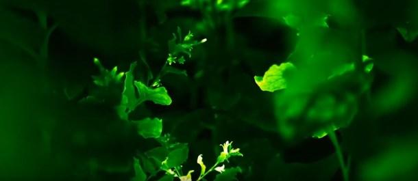 plantas luz