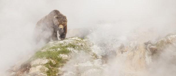 Siete-mundos-un-planeta-Asia-oso-Kamchatka