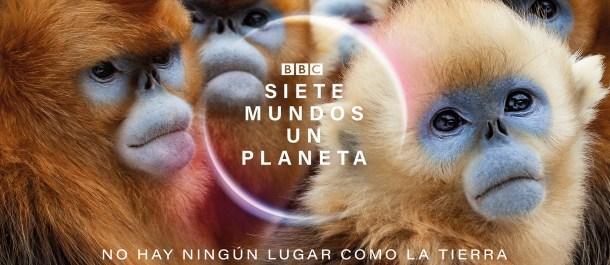 langur-chato-dorado-animales-asia-siete-mundos-un-planeta