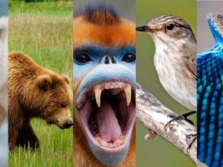 documental-siete-mundos-un-planeta-asia-animales