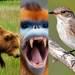 Conoce los animales que habitan Asia en el documental 'Siete mundos un planeta'