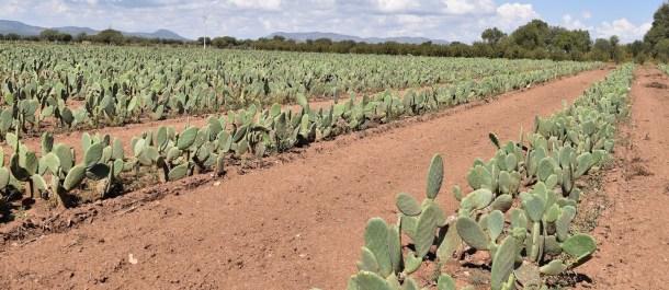 campo-cactus-desserto