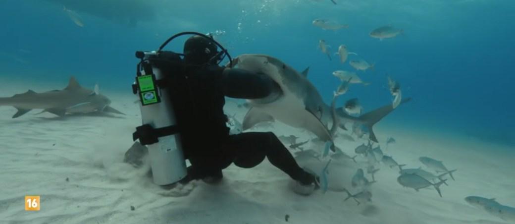 shark suit el hombre frente al tiburon documental