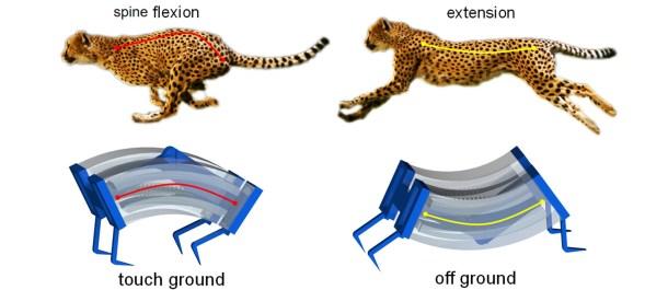 guepardo-robot-biomecanica